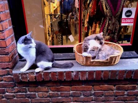 Two-Local-Cats